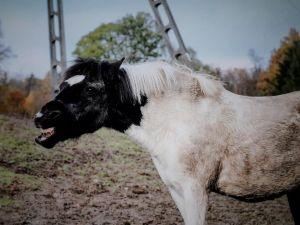 Perfect Horse Centre-6622
